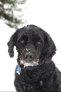 Victor, mascot of dogtrotting.net