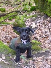dog, trail, dogtrotting.net