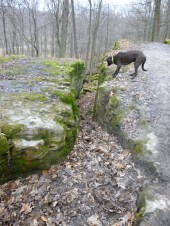 dog, trail, dogtrotting.net