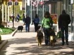 dog mall