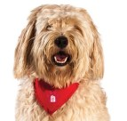 red roof pet image