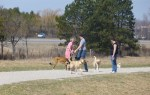 dog park Guelph