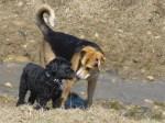 Guelph dog park