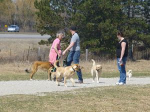 people and dogs in dog park, Guelph, Ontario