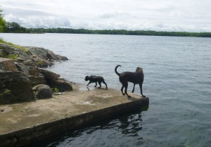 Victor and Sasha at the water's edge. Somewhere there's a leash. No, really.