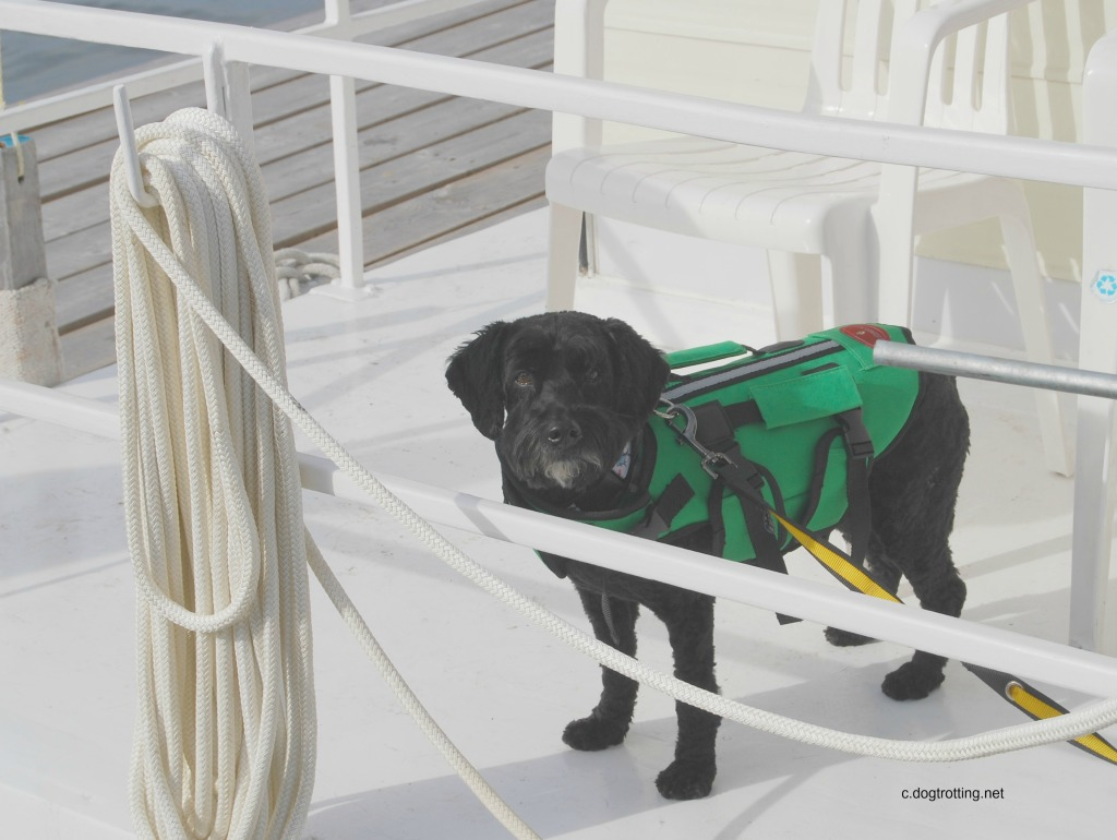 """Victor is """"ready captain"""" complete with lifejacket"""