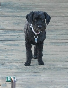 dog on the a dock in 1000 Islands
