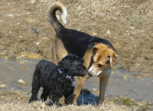 two dogs in dogpark, Guelph, Ontario