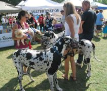 Dogs, not cows, at Pawlooza 2015