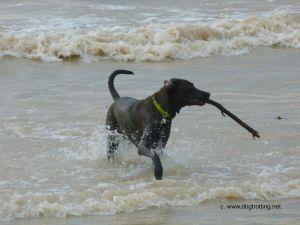 Sasha on Port Burwell Dog Beach