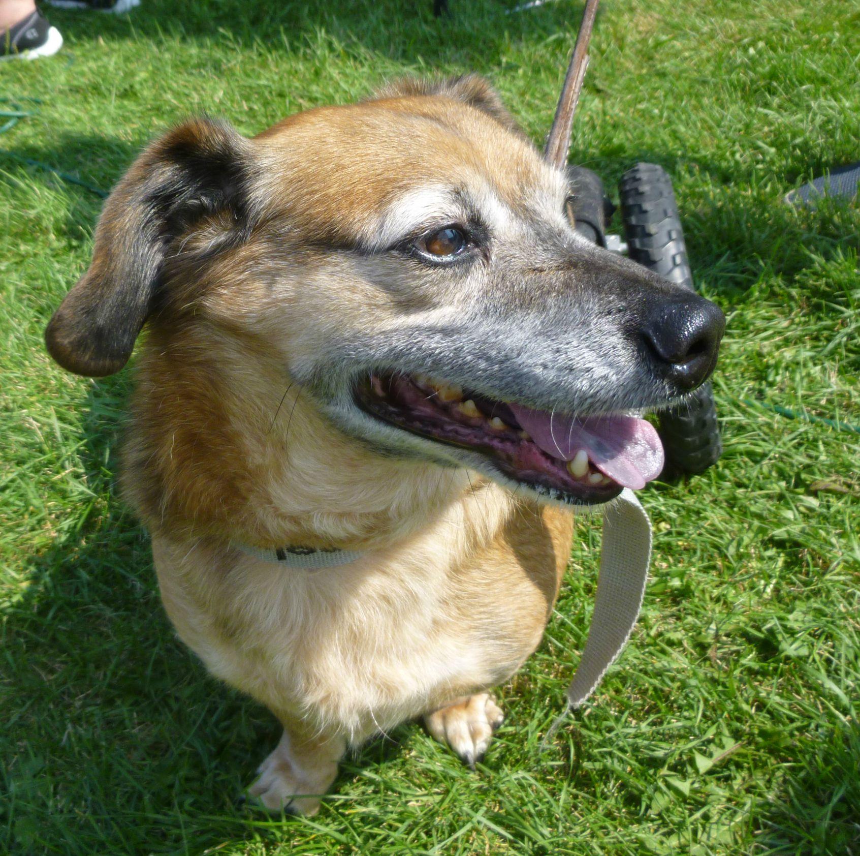 Disabled Dog Rescue Ontario Canada