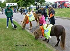 horses at the SPCA walk