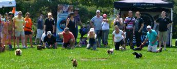 Dachshund dog races at Wienerpawlooza 2015