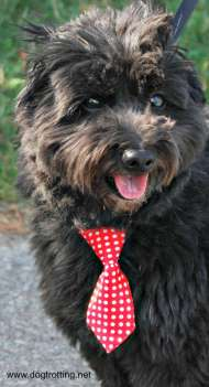 woofstock 2015 dog in tie