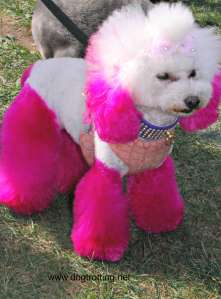 woofstock 2015 pink dog dogtrotting