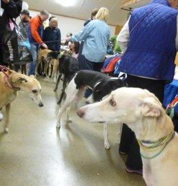 greyhound rescue dogtrotting.net