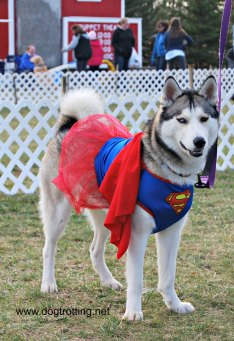 dog in super girl costume