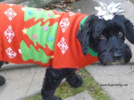 victor in christmas sweater blog