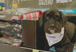 Dog in the Nutrience SubZERO pet food display at PetSmart #SubZeroDifference