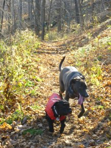 Victor & Sasha on the trail