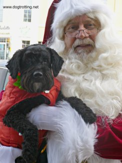dog and santa clause from www.dogtrotting.net