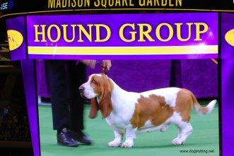 hound group