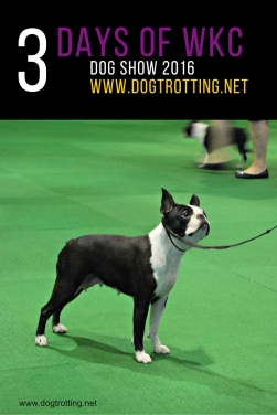 WKC Dog Show (1)