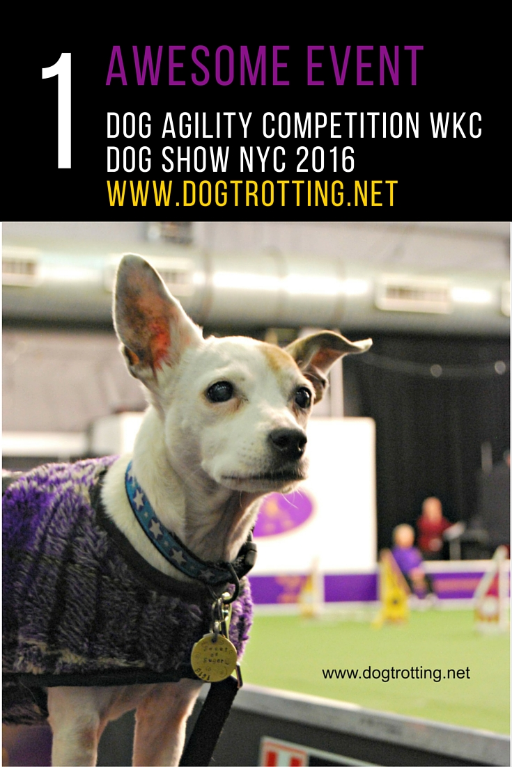 Wkc Dog Show
