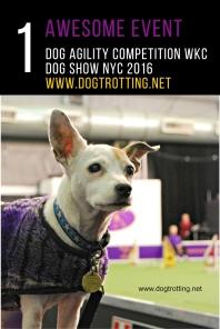 WKC Dog Show (3)
