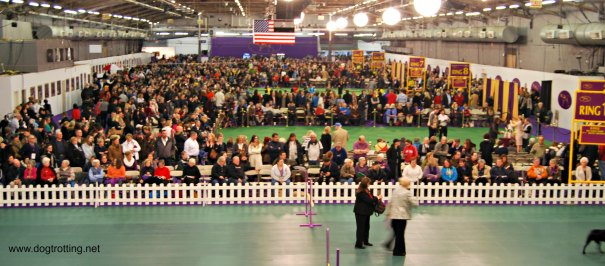 WKC Dog Show Breed Judging 10