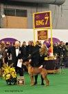 WKC Dog Show Breed Judging 8