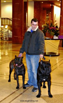 Dogs in the lobby of the Pennsylvania Hotel NYC