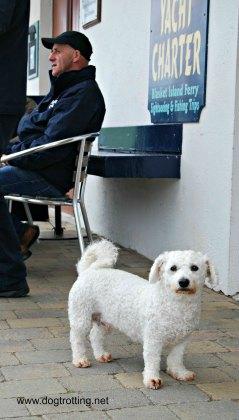 Dock dog Dingle Bay, Ireland