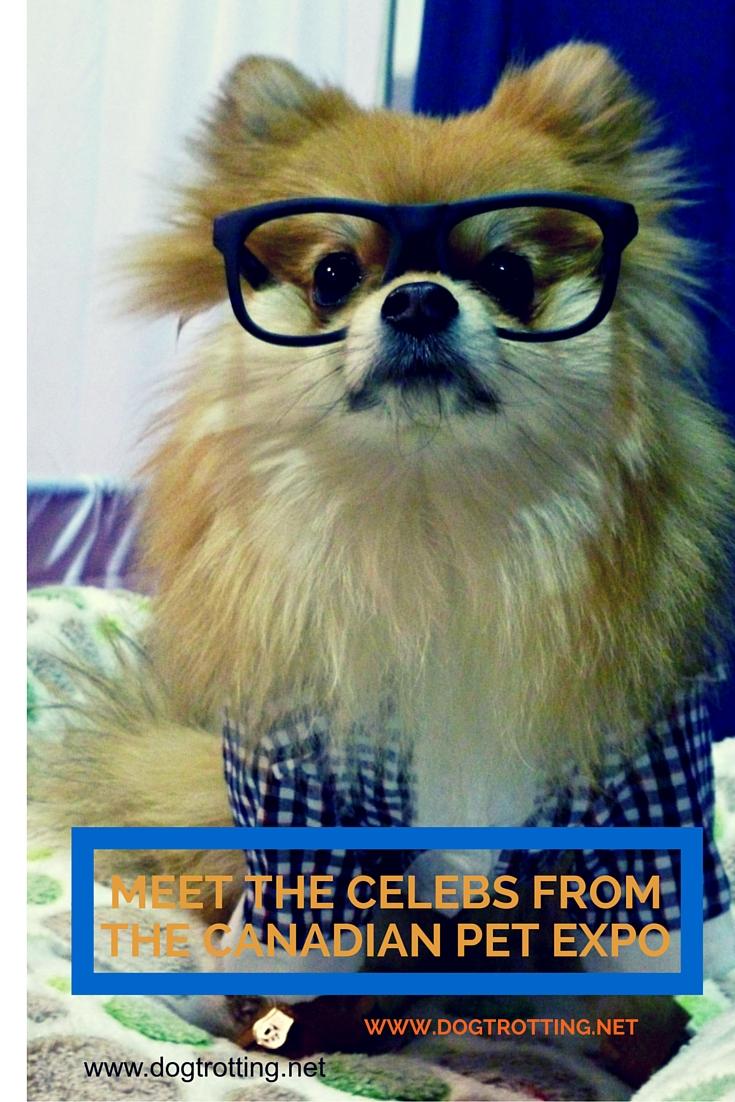 travel toronto pet expo meets the stars dog trotting