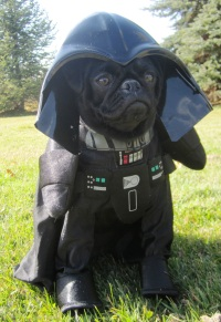 darth vador dog