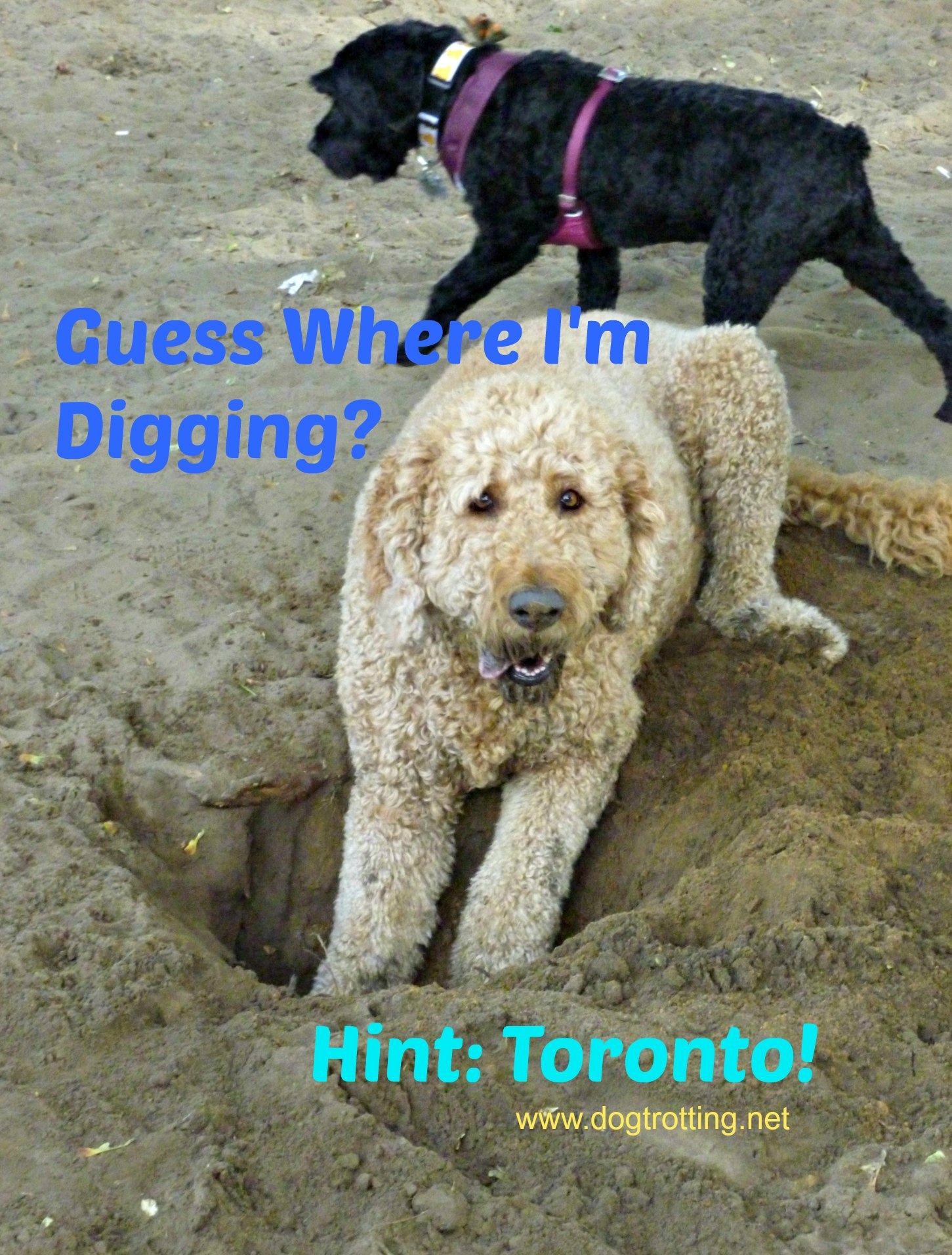 High Park Dog Park dogtrotting.net