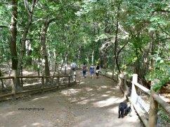 High Park Dog Park dogtrotting.net