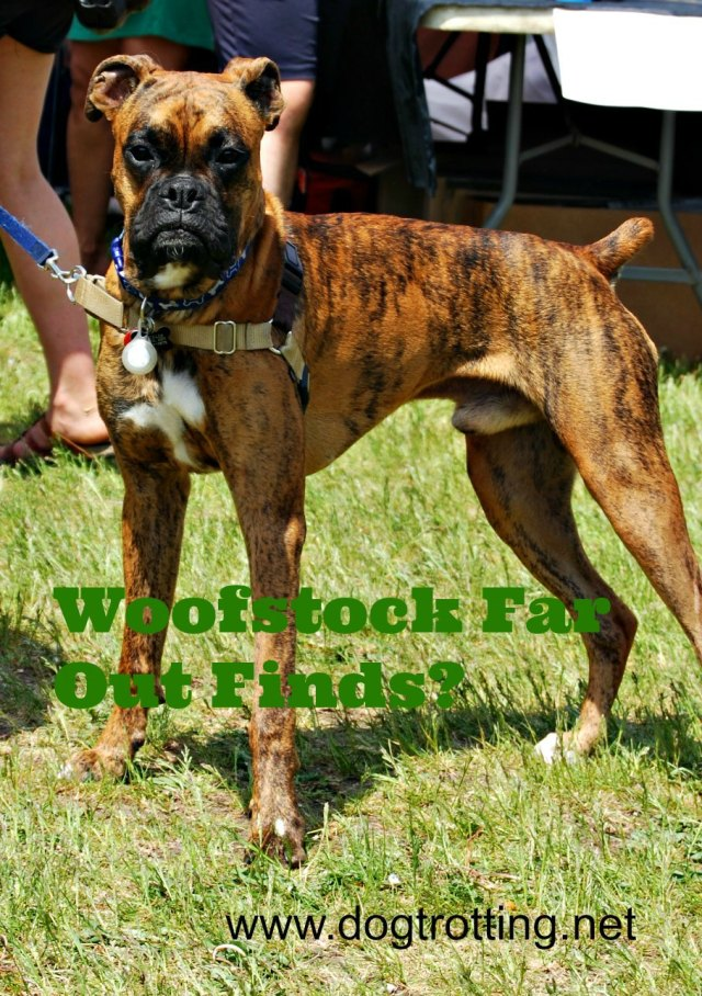 dog 2 woofstock boxer