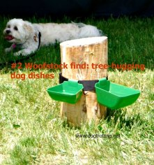 dog dish stumps woofstock