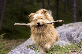 dog with stick from pixaby