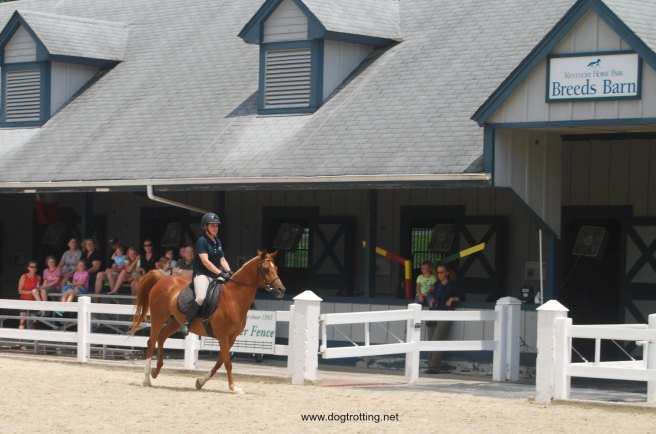 The Breeds Show at the dog-friendly Kentucky Horse Park