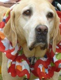 dog clown at Caledonia July 1 Festival