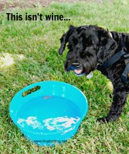 muddy paws dog bowl dogtrotting