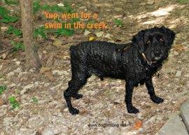 dog-friendly travel in Toledo Ohio Metropark