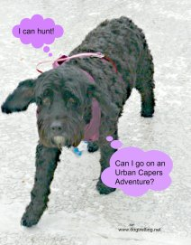 urban capers dog image