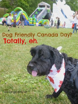 dog at Canada Day festival