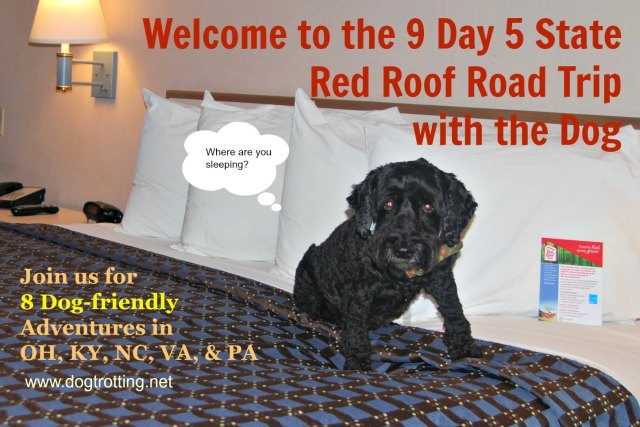 Dog at Red Roof Inn