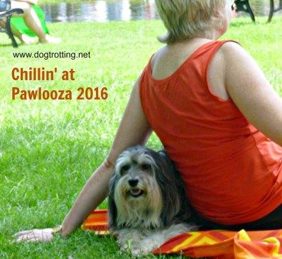 Pawlooza 2016 dogtrotting.net