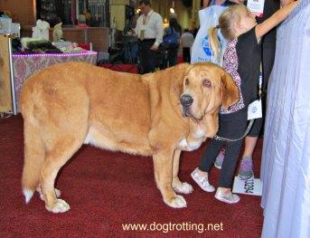 SuperZoo 2016 Pet Expo Las Vegas dogtrotting.net