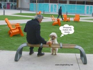 dog-2-at-notl-mall